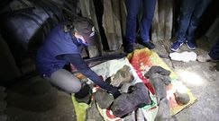 Szczątki przodka słonia. Niesamowite odkrycie w Kolumbii