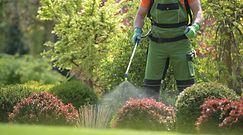 Niebezpieczne kleszcze. Pozbądź się groźnych pajęczaków z ogrodu