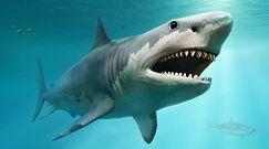 Naukowcy potwierdzają rozmiary prehistorycznego rekina