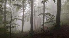 Spacer po zamglonym lesie. Spotkali małego niedźwiedzia