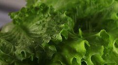 Salmonella w sałacie. Badania amerykańskich mikrobiologów