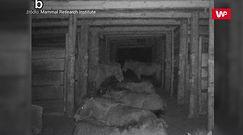 Czarnobylska Strefa Wykluczenia. Oto co uchwyciła fotopułapka