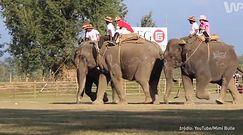 Polo na słoniach [Po bandzie]