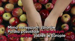 Ceny jabłek nawet dwa razy wyższe. Wszystko przez przymrozki