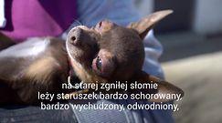 """Pudelek odwiedza psi Azyl. Prezes Fundacji Dom dla Kundelka: """"Zbieramy psiaki z ulicy, interwencji i po wypadkach"""""""