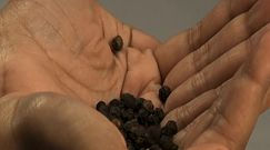 Dobroczynne właściwości czarnego pieprzu
