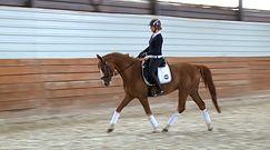 Pomysł na biznes: Szkoła jazdy konnej