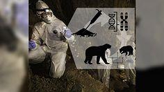 Sensacyjne odkrycie w Meksyku. Naukowcy uzyskali starożytne DNA