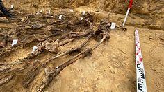Odkryto masowy grób z okresu II wojny światowej. Wśród ofiar kobiety i dzieci