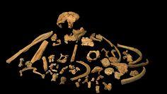 Starożytny ząb. Najstarsze DNA przodka człowieka