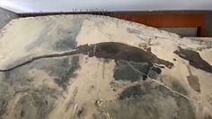 Chińscy archeolodzy odkryli skamielinę sprzed 240 milionów lat