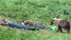 Ciekawski niedźwiadek. Mężczyźni zerwali się na równe nogi