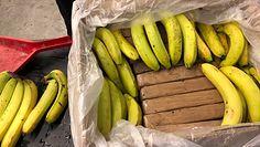 Narkotyki w bananach. Nowe informacje w śledztwie kanadyjskiej policji