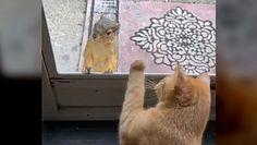 Kot i wiewiórka. Spotkanie przez szybę