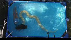 Dziewczynka w basenie z 11-metrowym wężem
