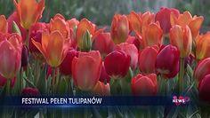 Niezwykły festiwal kwiatów. Miłośnicy tulipanów powinni to zobaczyć