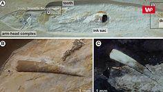 Skamielina sprzed 150 mln lat. Ujawniła nieudaną próbę polowania