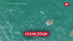 Ocean żółwi w Kostaryce