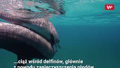 Szansa dla delfinów. Badania USG zdradziły prawdę