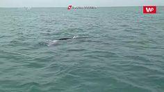 Zaskakujące spotkanie. Zauważyli go w Morzu Śródziemnym