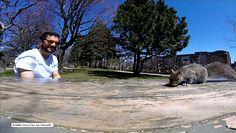 Wiewiórka przeszkodziła w pikniku i ukradła kamerę GoPro