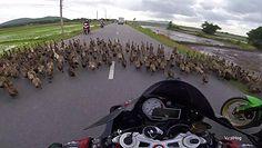 #dziejesiewmoto: setki kaczek zablokowało drogę i przewód elektryczny spada na auto
