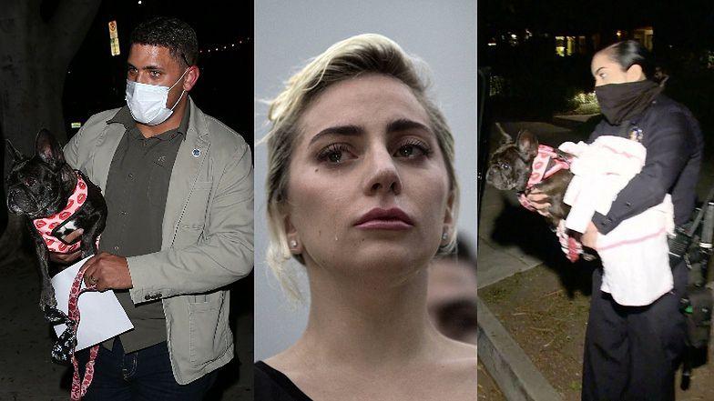 Bandyci POSTRZELILI mężczyznę, który wyprowadzał psy Lady Gagi i PORWALI jej dwa buldożki (ZDJĘCIA)