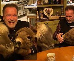 """Arnold Schwarzenegger tuli zwierzątka i przestrzega przed koronawirusem: """"Słuchaj naukowców i ekspertów, a nie GŁĄBÓW"""""""
