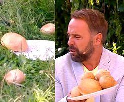 """Łukasz Nowicki rzuca bułkami o ziemię w """"Pytaniu na Śniadanie""""! Zabawne?"""