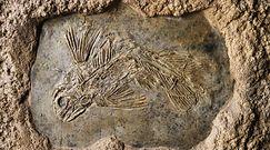Latimeria. Prehistoryczna ryba, u której właśnie wykryto coś zaskakującego