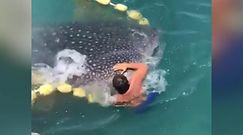 Rekin wielorybi zaplątał się w boje. Rybak natychmiast wskoczył do wody