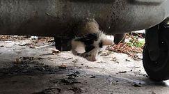 Zwierzę utknęło w rurze. Strażacy uratowali kota