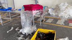 Walizka z niespodzianką. Lotnisko w Ekwadorze udaremniło przemyt żywych zwierząt