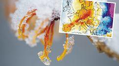 Pogoda. Straszą zimą, a przyroda wie swoje. Sypotyk IMGW przyznaje