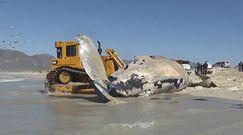 Martwy humbak na plaży. Fale wyrzuciły olbrzyma na brzeg
