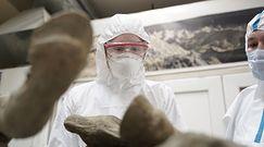 Prehistoryczne wirusy z Rosji. Zaskakujące, co odsłania wieczna zmarzlina