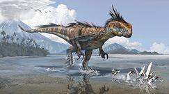 Ostatni z megaraptorów. Nowe odkrycie archeologów w Argentynie