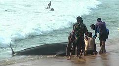 Walenie na plaży. Mieszkańcy złamali godzinę policyjną, ruszając na pomoc