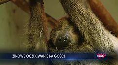 Myszojeleń w warszawskim zoo. Zobacz, jak zareagował na śnieg
