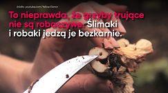 Jak bezpiecznie zbierać grzyby