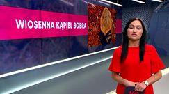 Bóbr z Biłgoraja nową gwiazdą internetu