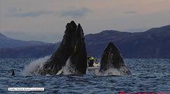 Płetwonurek mógł skończyć jako wielorybi posiłek
