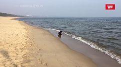 Niecodzienne spotkanie nad Zatoką Gdańską