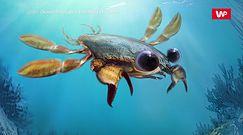 Dziobak wśród krabów