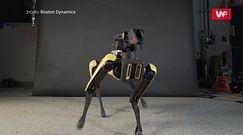 Tańczący robot. Maszyna robi furorę w internecie