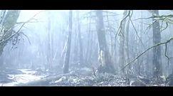 Dark Souls II - Przeklęty