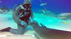 Rekin, który uwielbia być głaskany