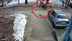 Wataha dzikich psów zaatakowała dziecko. Przerażające nagranie z monitoringu