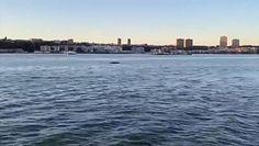 Wieloryb w Nowym Jorku. Mieszkańcy przecierali oczy ze zdumienia
