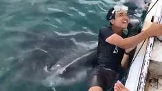"""Rekin wielorybi w akcji. Gigantyczna ryba chciała """"połknąć"""" nurka"""